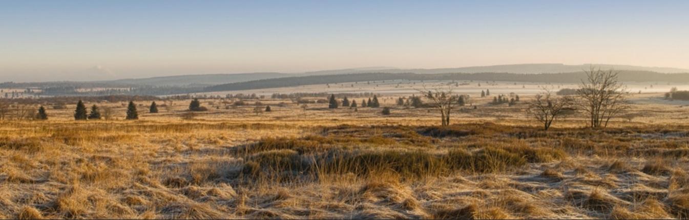 Elsenborn Ridge 02